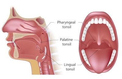 Sakit Tonsil Location